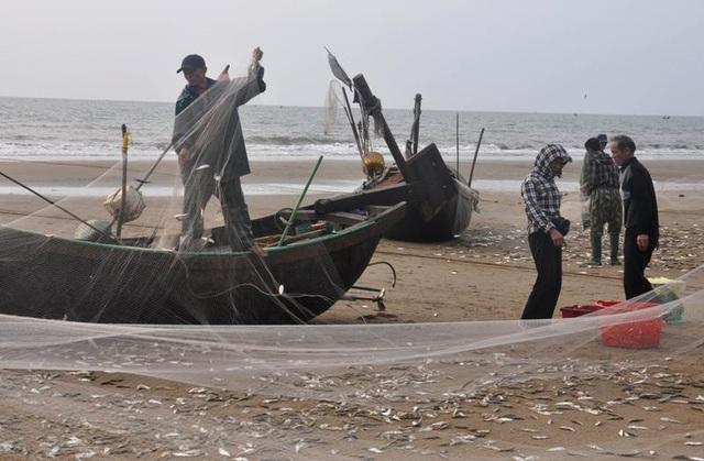 """Thanh Hoá: """"Hốt bạc"""" mùa cá trích ở Sầm Sơn - 2"""