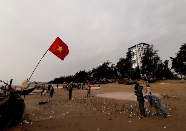 """Thanh Hoá: """"Hốt bạc"""" mùa cá trích ở Sầm Sơn - 4"""