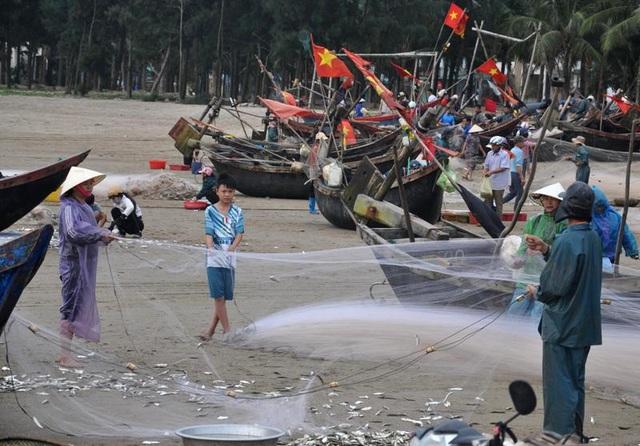 """Thanh Hoá: """"Hốt bạc"""" mùa cá trích ở Sầm Sơn - 3"""