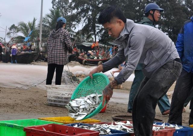 """Thanh Hoá: """"Hốt bạc"""" mùa cá trích ở Sầm Sơn - 12"""