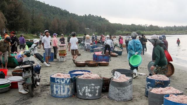 Ngư dân Đà Nẵng trúng đậm mùa ruốc biển - 1