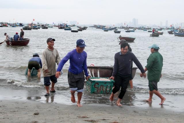 Ngư dân Đà Nẵng trúng đậm mùa ruốc biển - 2