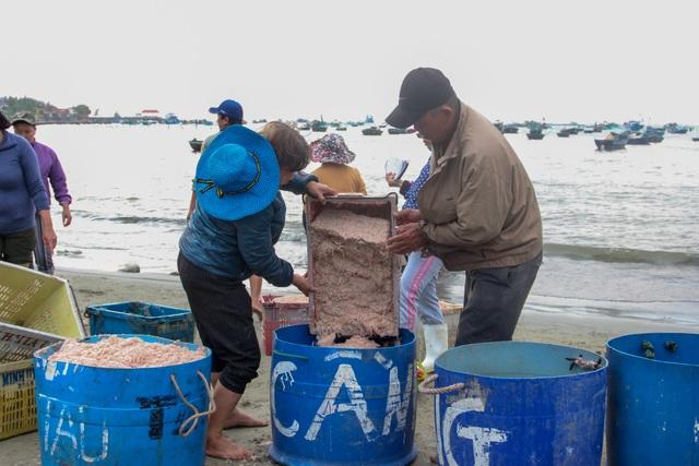 Ngư dân Đà Nẵng trúng đậm mùa ruốc biển - 4