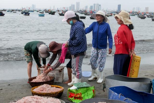 Ngư dân Đà Nẵng trúng đậm mùa ruốc biển - 7