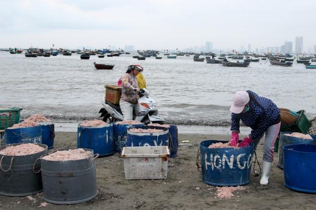 Ngư dân Đà Nẵng trúng đậm mùa ruốc biển - 9