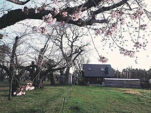 Vẻ đẹp thơ mộng của ngôi nhà gỗ giữa cánh đồng cỏ, ai nhìn cũng muốn ở - 5