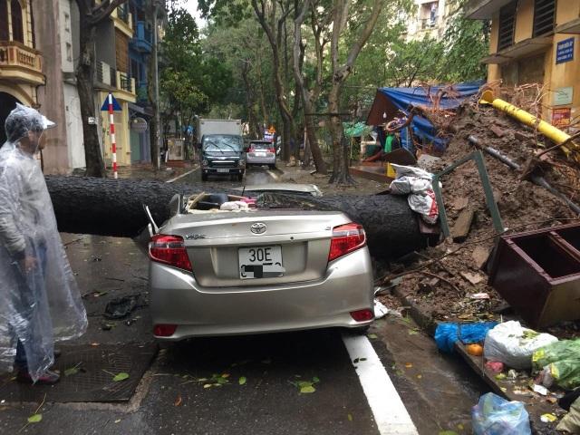 Hà Nội: Xế hộp bị cây cổ thụ bật gốc đè bẹp sau cơn mưa lớn