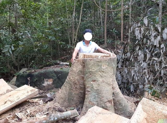 """Cận cảnh cánh rừng ngay gần uỷ ban xã bị """"xẻ thịt"""", gỗ hộp nằm ngỗn ngang - 1"""
