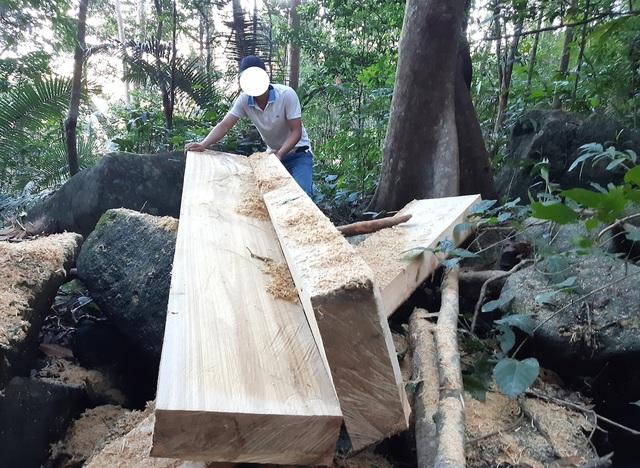 """Cận cảnh cánh rừng ngay gần uỷ ban xã bị """"xẻ thịt"""", gỗ hộp nằm ngỗn ngang - 4"""