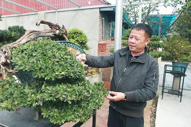 Đầu tư 10 tỷ đồng chơi cây cảnh, đại gia Hà Nội đang có khối tài sản siêu khủng - 2