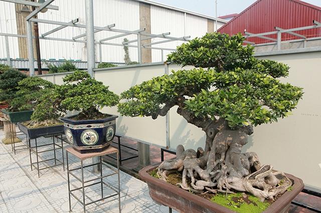 Đầu tư 10 tỷ đồng chơi cây cảnh, đại gia Hà Nội đang có khối tài sản siêu khủng - 5