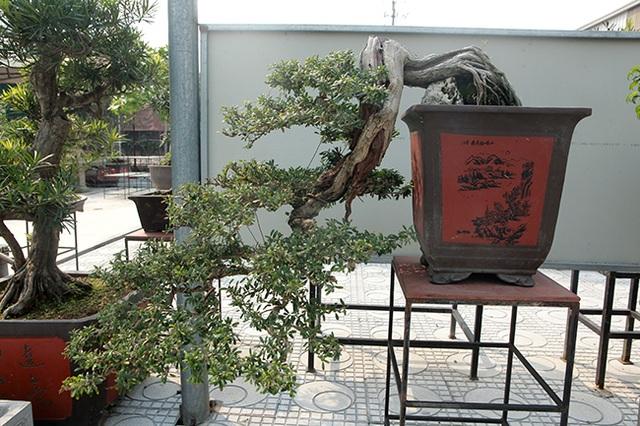 Đầu tư 10 tỷ đồng chơi cây cảnh, đại gia Hà Nội đang có khối tài sản siêu khủng - 6