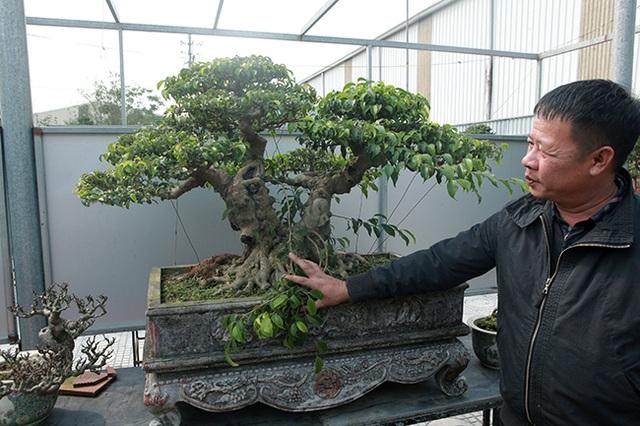 Đầu tư 10 tỷ đồng chơi cây cảnh, đại gia Hà Nội đang có khối tài sản siêu khủng - 8