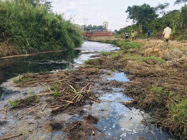 Cá chết trắng cạnh nhà máy giấy: Nước thải ô nhiễm nặng - 1