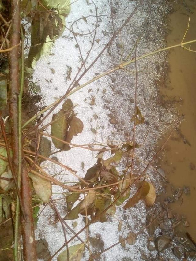 Nhiều nơi ở Lào Cai trắng xóa vì mưa đá - 4
