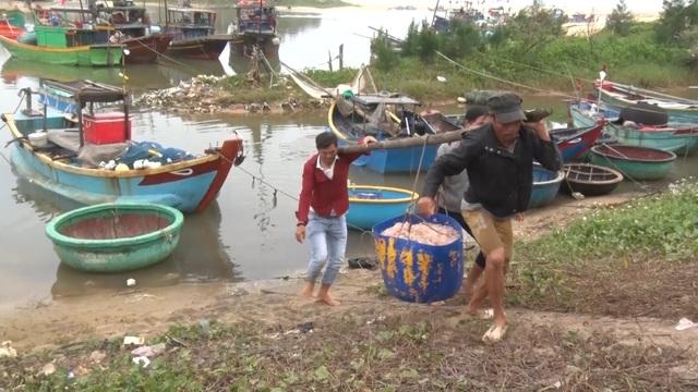 Trúng mẻ ruốc biển, ngư dân kiếm cả chục triệu đồng mỗi ngày - 6