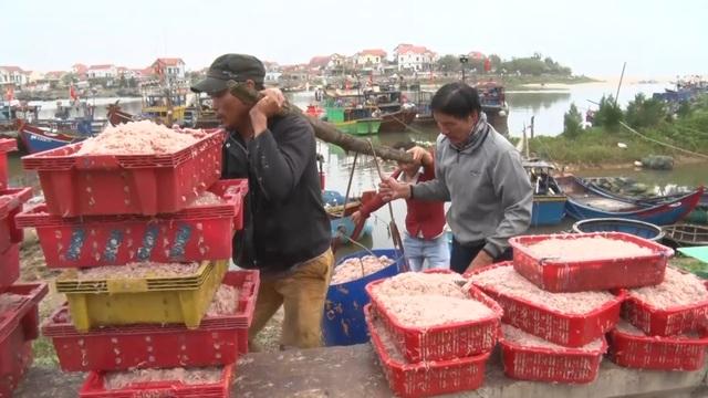 Trúng mẻ ruốc biển, ngư dân kiếm cả chục triệu đồng mỗi ngày - 1