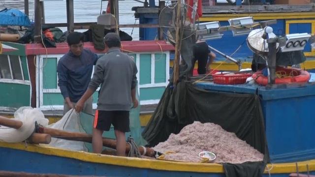 Trúng mẻ ruốc biển, ngư dân kiếm cả chục triệu đồng mỗi ngày - 3