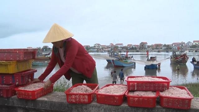 Trúng mẻ ruốc biển, ngư dân kiếm cả chục triệu đồng mỗi ngày - 12