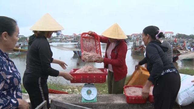 Trúng mẻ ruốc biển, ngư dân kiếm cả chục triệu đồng mỗi ngày - 4