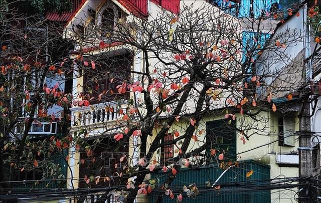 Hà Nội đẹp lạ lùng mùa cây thay lá - 2