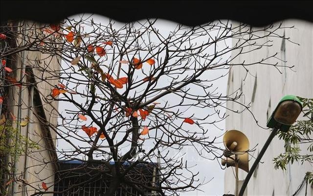 Hà Nội đẹp lạ lùng mùa cây thay lá - 5