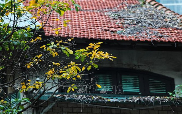 Hà Nội đẹp lạ lùng mùa cây thay lá - 6