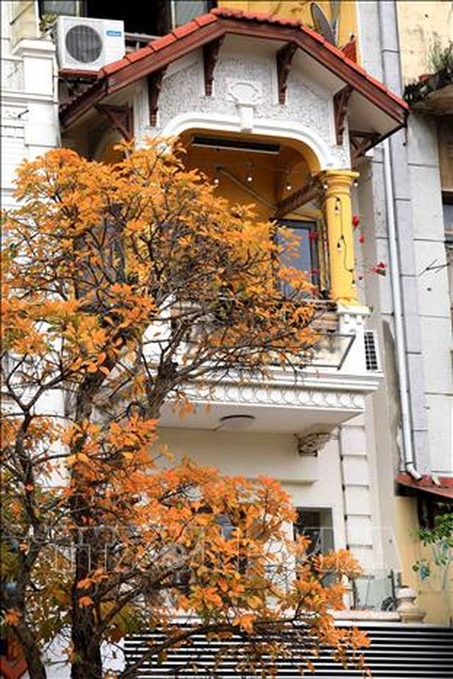 Hà Nội đẹp lạ lùng mùa cây thay lá - 9