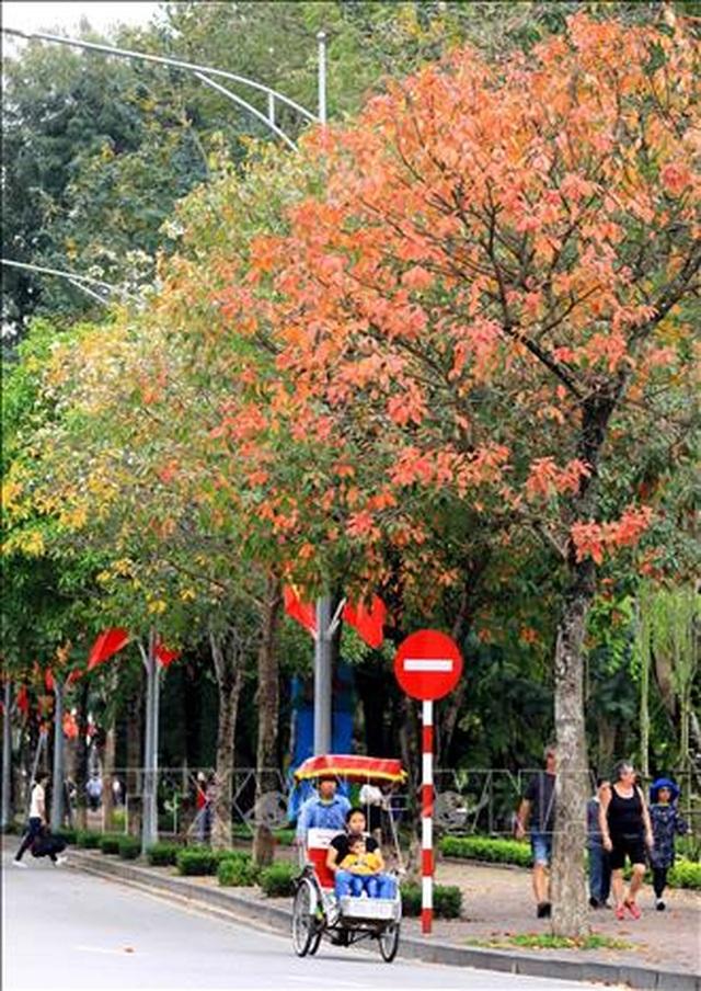 Hà Nội đẹp lạ lùng mùa cây thay lá - 11