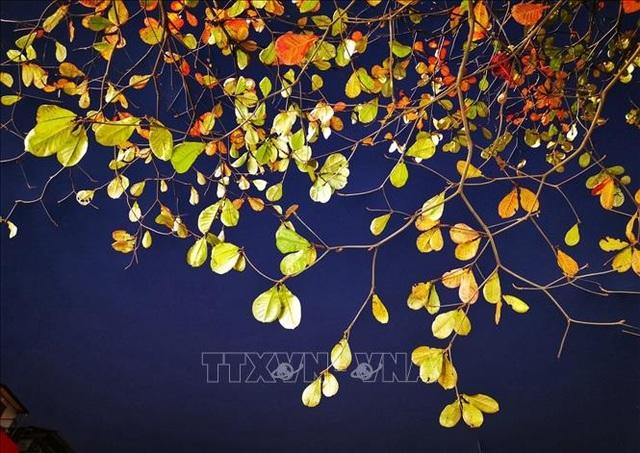 Hà Nội đẹp lạ lùng mùa cây thay lá - 13