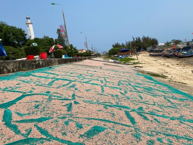Trúng mẻ ruốc biển, ngư dân kiếm cả chục triệu đồng mỗi ngày - 11