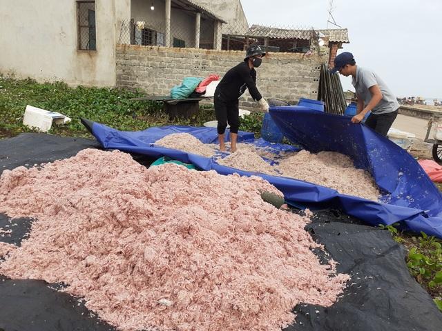 Trúng mẻ ruốc biển, ngư dân kiếm cả chục triệu đồng mỗi ngày - 7
