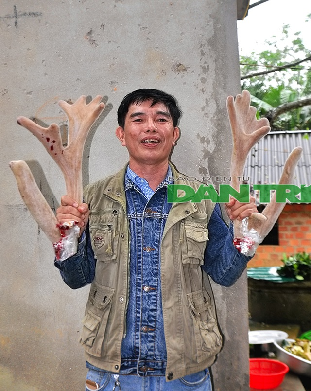 """Ngắm cặp nhung """"siêu khủng"""", bán giá gần cả cây vàng tại Hà Tĩnh - 5"""