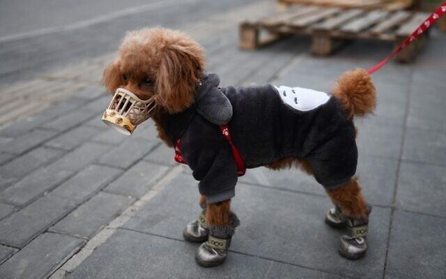 Hong Kong xác nhận trường hợp chó cưng nhiễm virus corona - 1