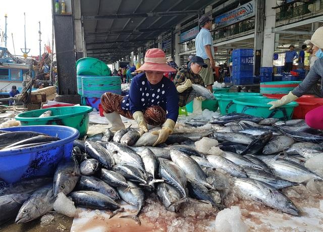 Khánh Hòa: Cá ngừ tấp nập về bờ, người lao động tất bật từ sáng đến trưa - 2