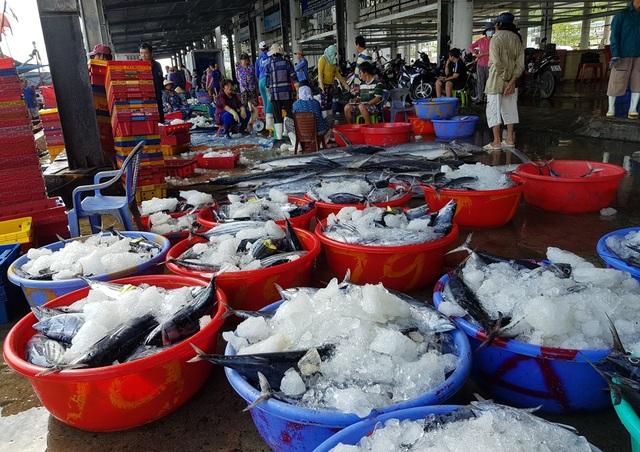 Khánh Hòa: Cá ngừ tấp nập về bờ, người lao động tất bật từ sáng đến trưa - 6