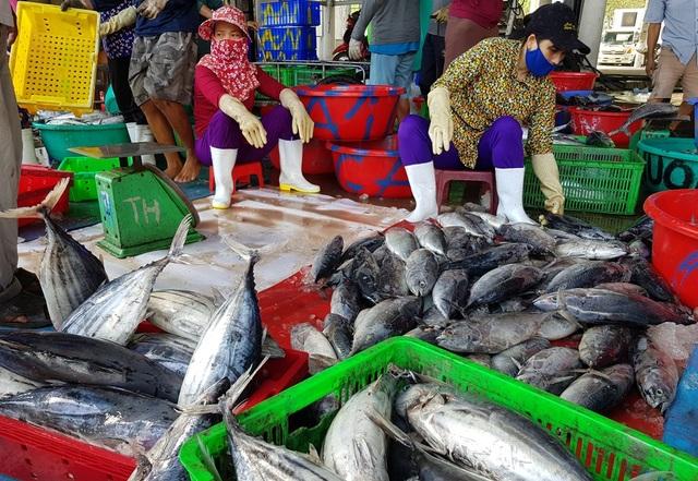 Khánh Hòa: Cá ngừ tấp nập về bờ, người lao động tất bật từ sáng đến trưa - 5