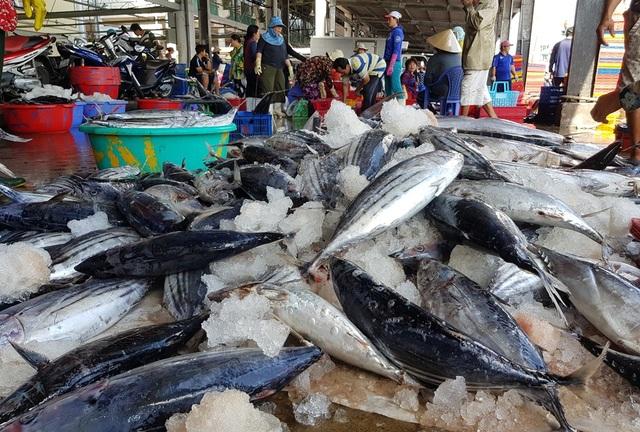 Khánh Hòa: Cá ngừ tấp nập về bờ, người lao động tất bật từ sáng đến trưa - 1