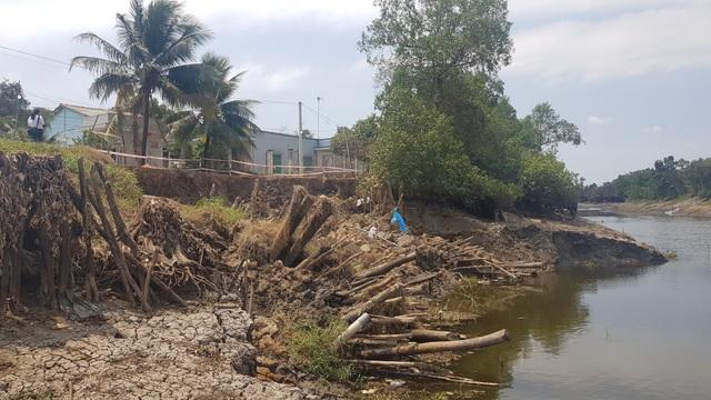 Sông ngoạm bờ 10m, ao cá, vườn cây tiền tỷ cuốn theo dòng nước - 3
