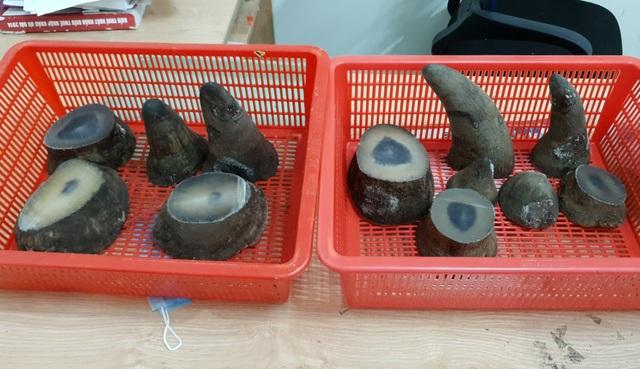 Hải quan Tân Sơn Nhất bắt giữ 6,2kg sừng tê giác - 1