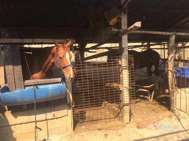 Gian nan nghề nuôi ngựa đua - 3