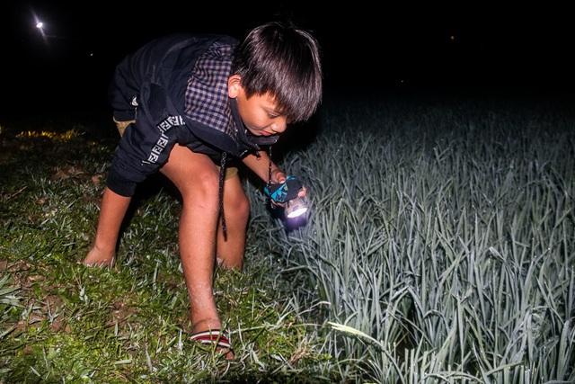 Theo chân người dân đi săn cua đồng đêm  - 7