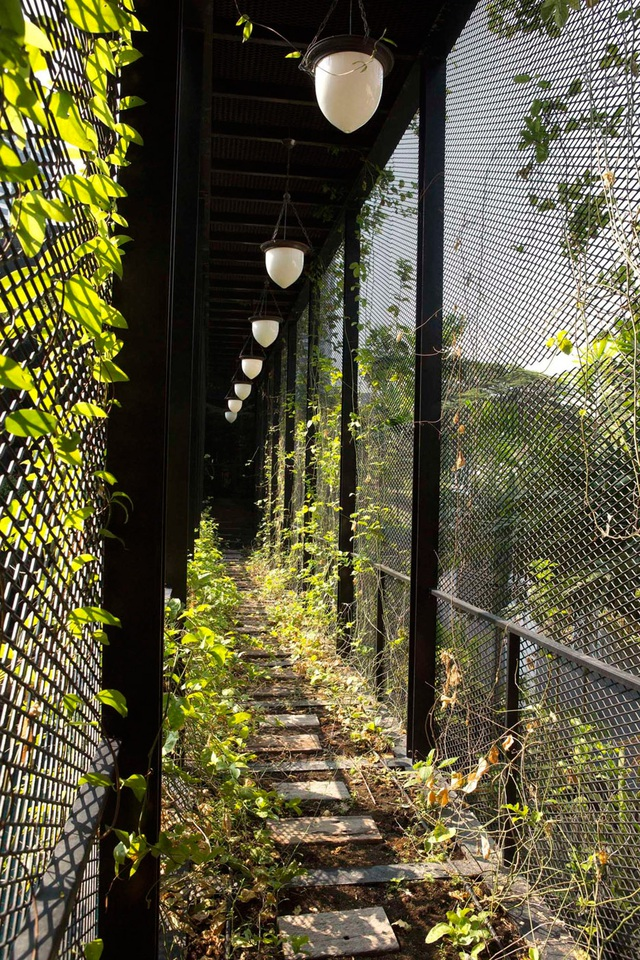 """Sửng sốt với """"khu vườn nhiệt đới"""" ngay trên nóc nhà biệt thự ở Singapore - 11"""