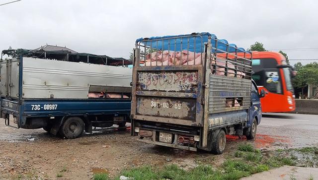 Quảng Bình: Bắt 2 xe chở lợn trốn kiểm dịch đang trên đường đi tiêu thụ - 1