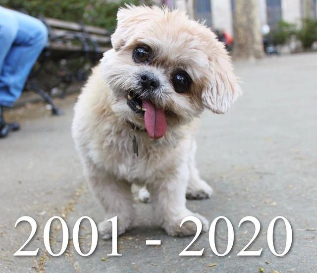 Chú chó nổi nhất Instagram qua đời - 1,8 triệu người hâm mộ nát con tim - 2
