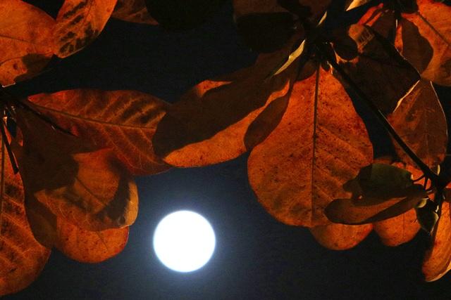 Chiêm ngưỡng siêu trăng trên bầu trời Hà Nội vào đêm 9/3 - 10