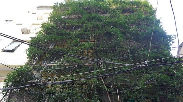 Nhà cây 5 tầng phủ kín hoa giấy ở Hà Nội, ai đi qua cũng dừng lại ngắm - 3