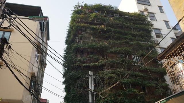 Nhà cây 5 tầng phủ kín hoa giấy ở Hà Nội, ai đi qua cũng dừng lại ngắm - 4