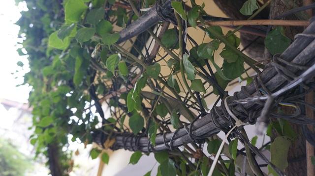 Nhà cây 5 tầng phủ kín hoa giấy ở Hà Nội, ai đi qua cũng dừng lại ngắm - 6