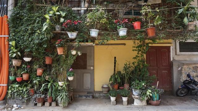 Nhà cây 5 tầng phủ kín hoa giấy ở Hà Nội, ai đi qua cũng dừng lại ngắm - 8
